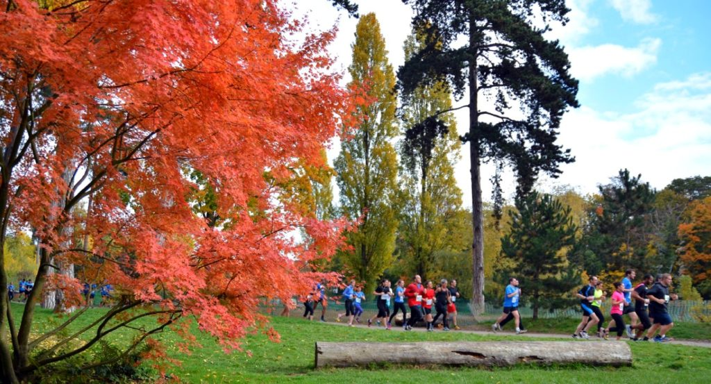 A wooded half-marathon in the colours of autumn