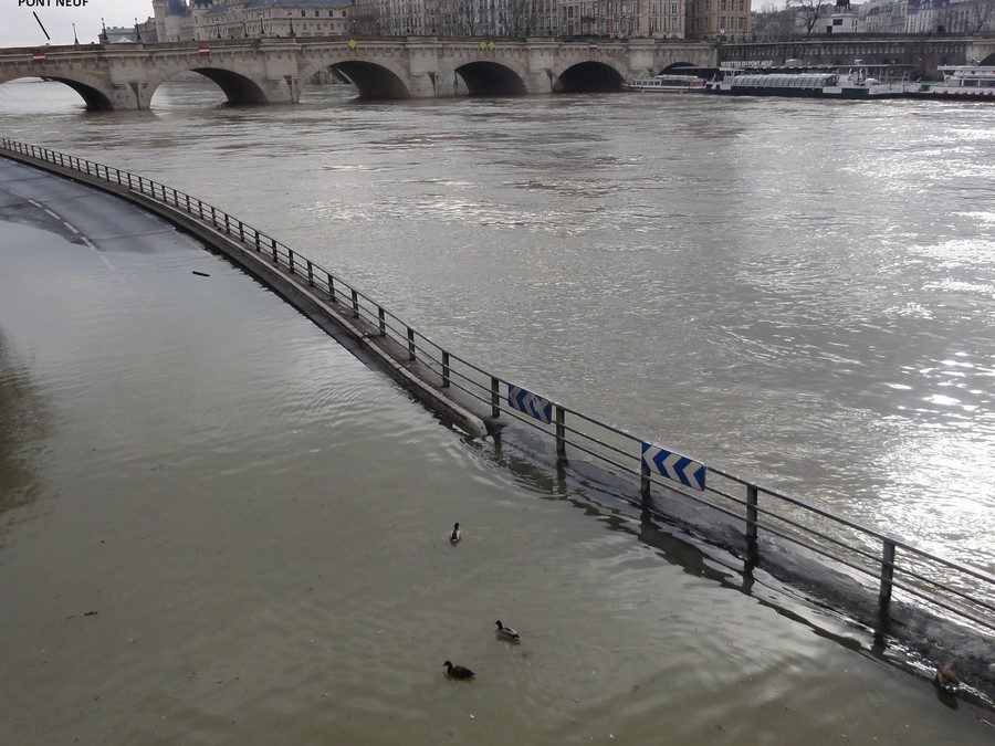 Ducks swimming on the route of the Paris Marathon?